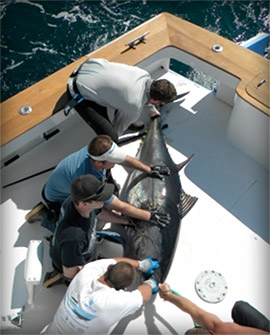 Gulf Stream Charter Fishing Trips from Oregon Inlet