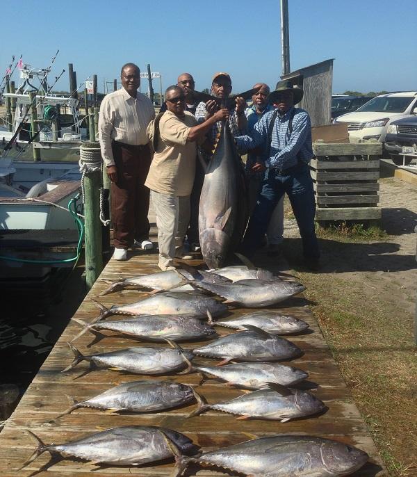 Yellowfin Tuna from the Gulf Stream
